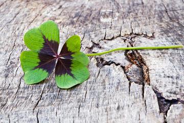 vierblättriges Kleeblatt auf Holz