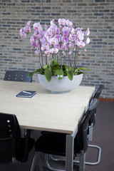 Phalaenopsis in office interior