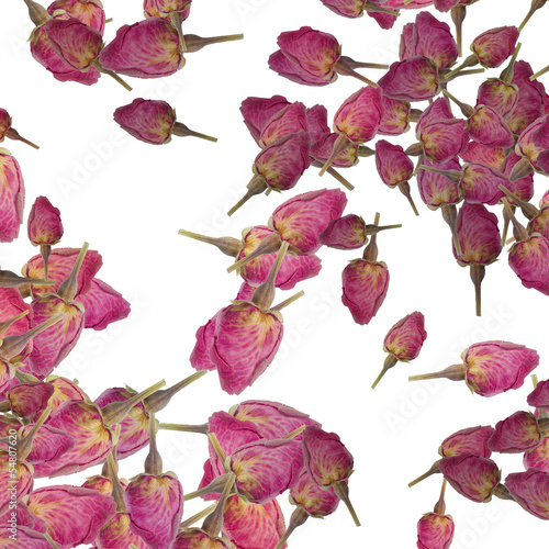 background of rose buds