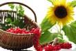 Küchen Stillleben mit frischen Johannisbeeren