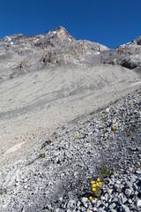 flora spontanea di alta montagna