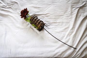 rosa roja en un cofre, sobre una sábana arrugada