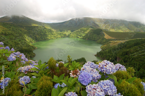 Hydrangeas on the volcano