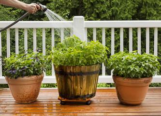 Watering Home Garden
