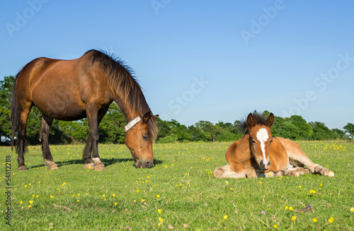 Mother Horse and Young  Foal