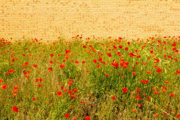 Urban Wild Flowers