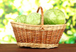Green cabbage in wicker basket, on bright background