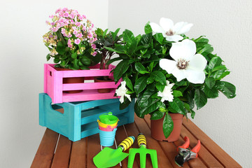 Many beautiful flowers on table in room