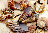 Close view of a collection of small seashells.
