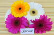 Get well card with gerbera daisies bouquet