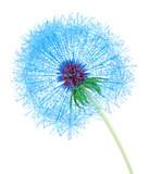 Web Dandelion - 54840244