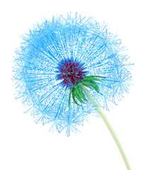 Web Dandelion