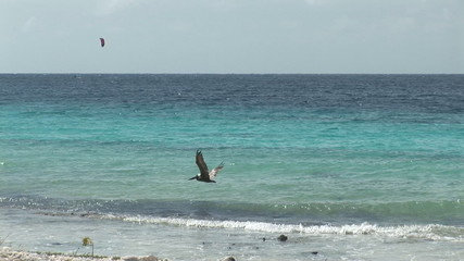 Kite surfer and pelican