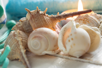Seashells on wooden background
