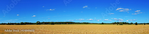 canvas print picture wheat field panorama
