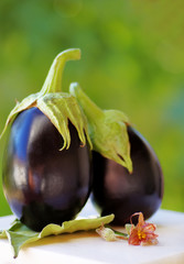 Two black eggplants on table,green background