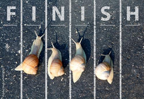 Leinwanddruck Bild Snail run near the Finish line