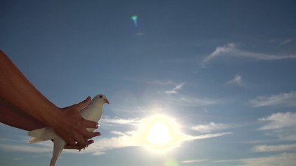woman lets out pigeon into the sky, Slow Motion