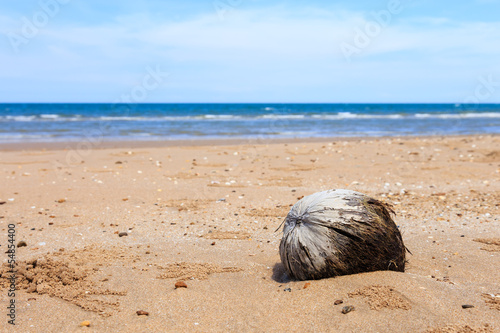 Old brown coconut on the beach