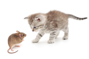 Mouse and kitten