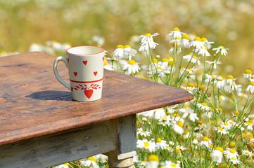 Kaffee im Margaritenfeld