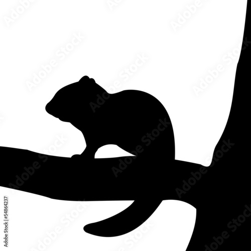 Silhouette of chipmunk on the tree.