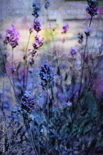 Beautiful dreamy lavender flowers
