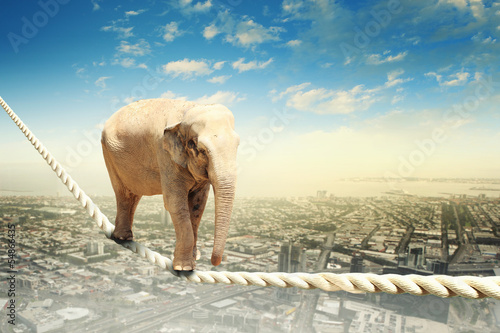 Foto op Canvas Foto van de dag Elephant walking on rope
