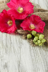 Pink mallow flowers on wooden background
