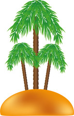 Palm on the island