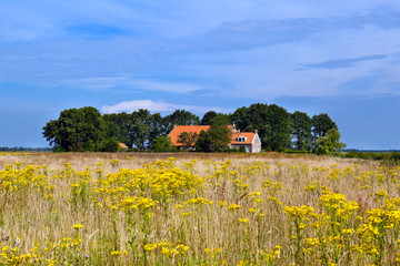 farmhouse and yellow wildflowers field