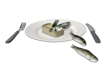 sardines in a can