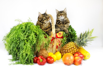 Cats in a basket with fruits and vegetables