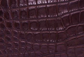 skin crocodile brown textured leather