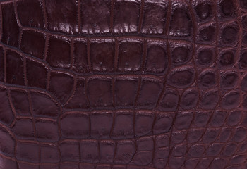 brown skin crocodile  textured leather