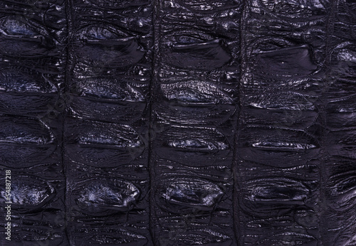 Poster black skin crocodile textured