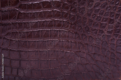 Poster skin crocodile textured brown leather
