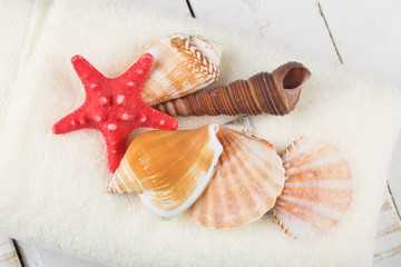 Seashells on towel on wooden background