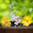 canvas print picture - kleiner springbrunnen