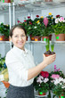 florist with hyacinth (Hyacinthus) at  store