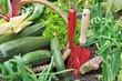 outils de jardinage dans potager