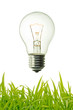 vintage lightet bulb and green grass background