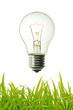vintage lightet bulb and green grass background