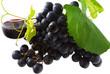 vin, vigne, raisin