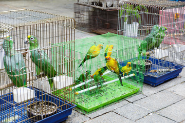 Bird for sell in Hong Kong