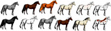 vector illustration showing the different color of the horse