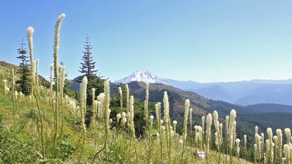 Fields of Bear Grass with Mt Jefferson in background no audio