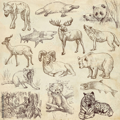 Animals around the world (collection no.2, old paper )
