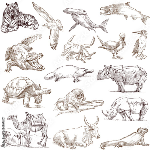Animals around the world (collection no.3, white )