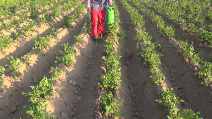 farmer with protective equipment spraying  potato field